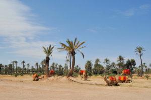 las ciudades mas bonitas del mundo marrakech